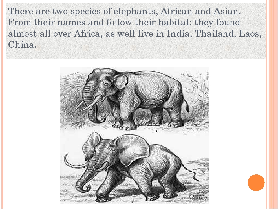 There are two species of elephants, African and Asian. From their names and f...