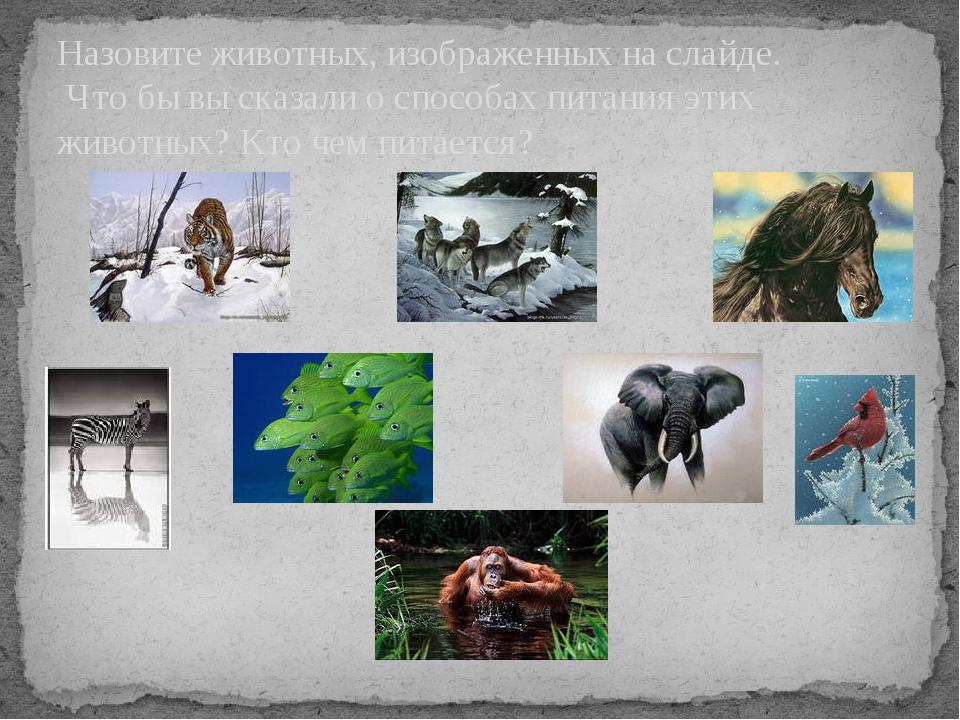Назовите животных, изображенных на слайде. Что бы вы сказали о способах пита...
