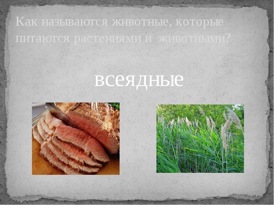 Как называются животные, которые питаются растениями и животными? всеядные