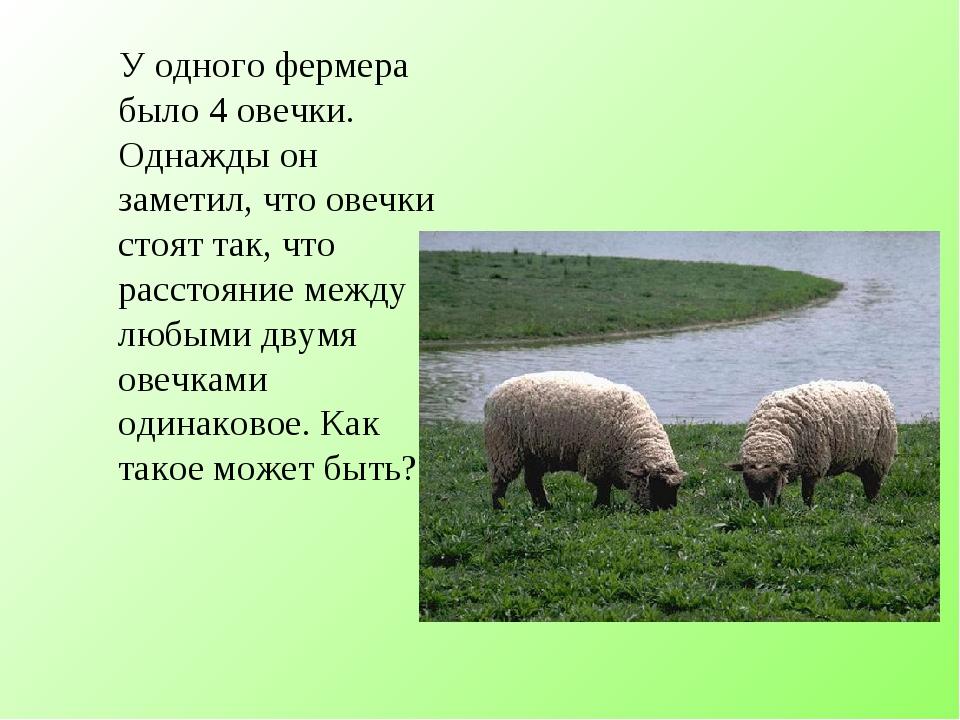 У одного фермера было 4 овечки. Однажды он заметил, что овечки стоят так, чт...