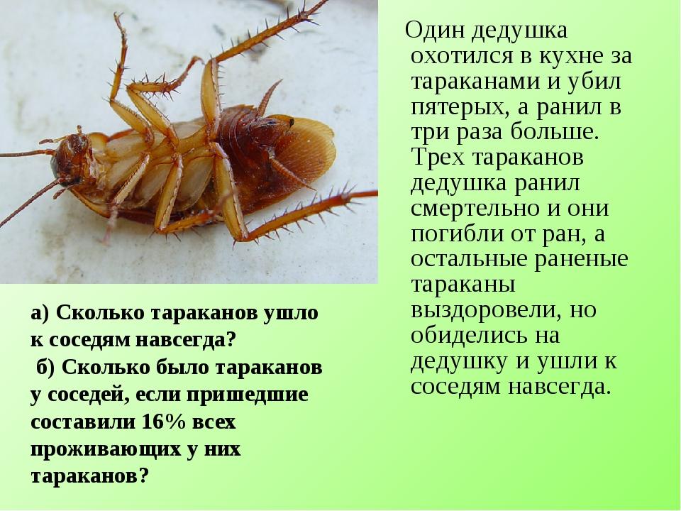Один дедушка охотился в кухне за тараканами и убил пятерых, а ранил в три ра...