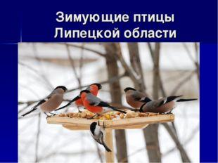 Зимующие птицы Липецкой области