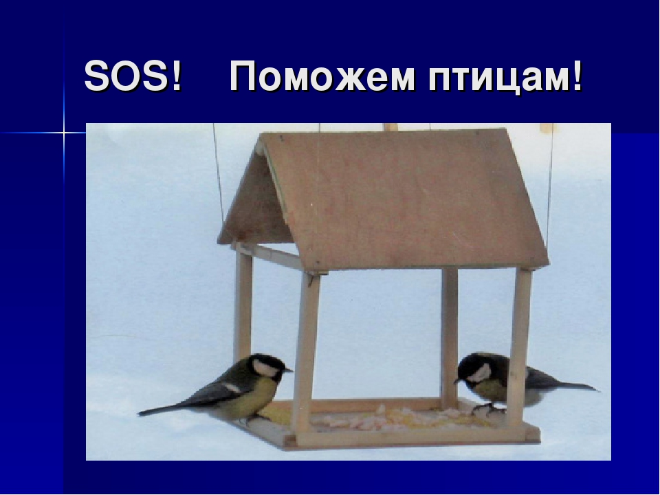 SOS! Поможем птицам!