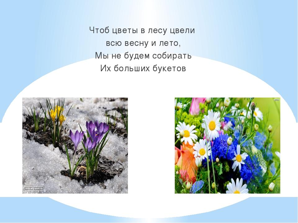 Чтоб цветы в лесу цвели всю весну и лето, Мы не будем собирать Их больших бу...
