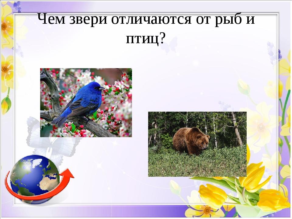 Чем звери отличаются от рыб и птиц?
