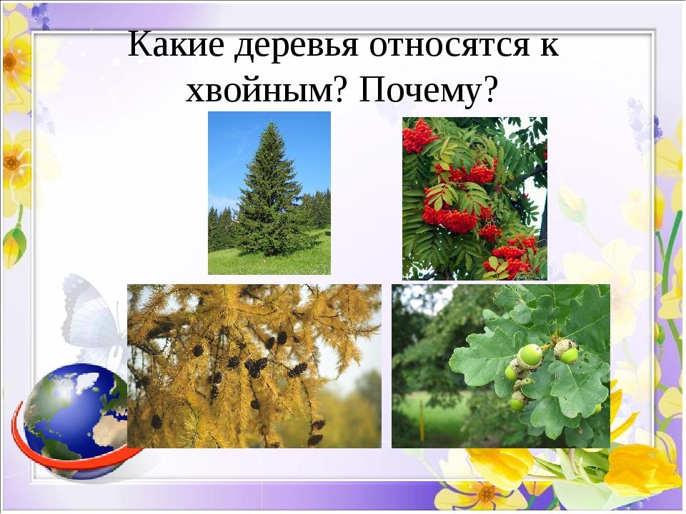 Какие деревья относятся к хвойным? Почему?