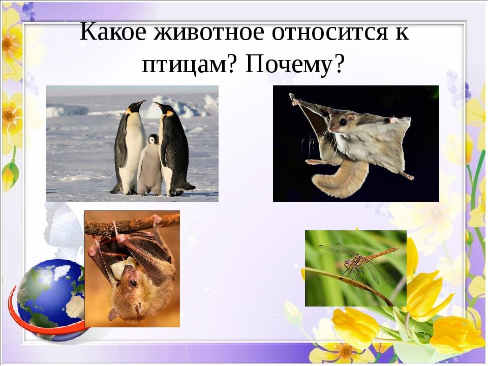 Какое животное относится к птицам? Почему?