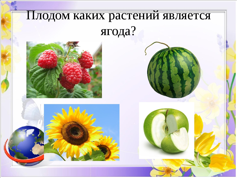 Плодом каких растений является ягода?