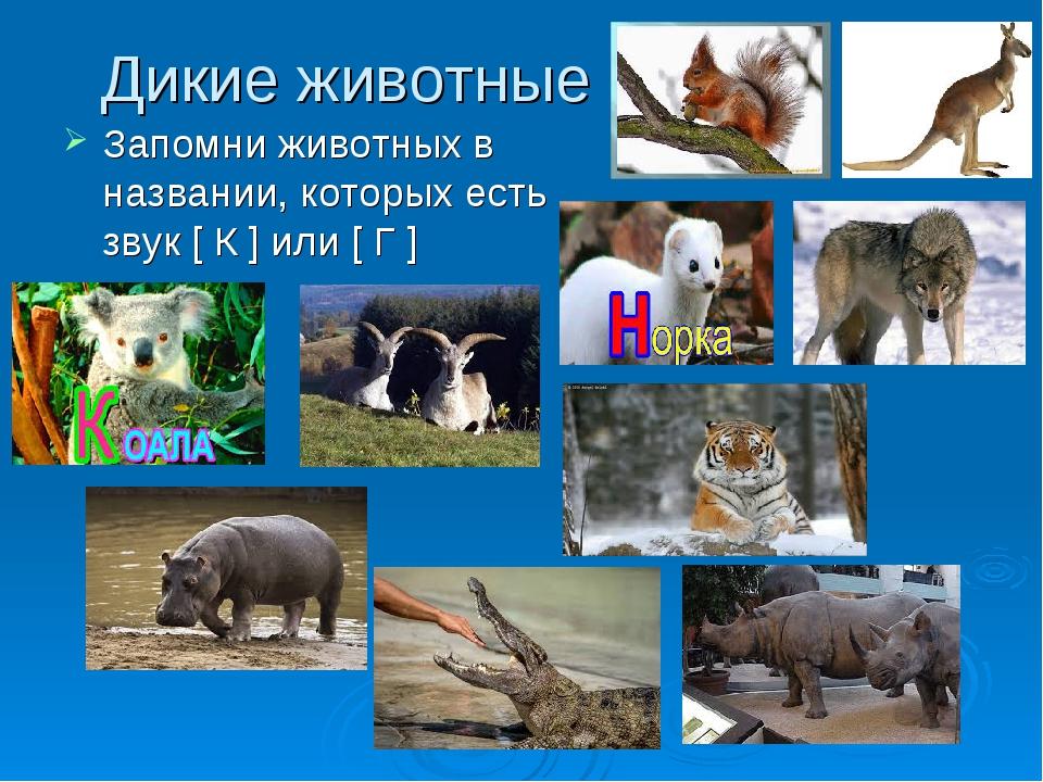 Дикие животные Запомни животных в названии, которых есть звук [ К ] или [ Г ]