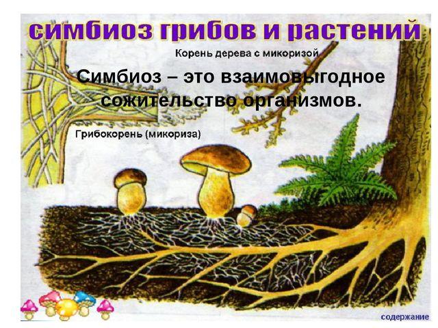 Симбиоз – это взаимовыгодное сожительство организмов.