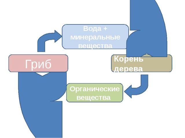 Гриб Корень дерева Вода + минеральные вещества Органические вещества