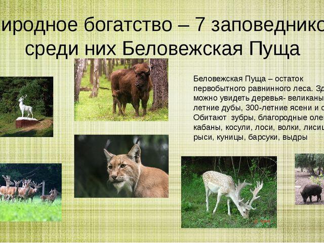 Природное богатство – 7 заповедников, среди них Беловежская Пуща Беловежская...