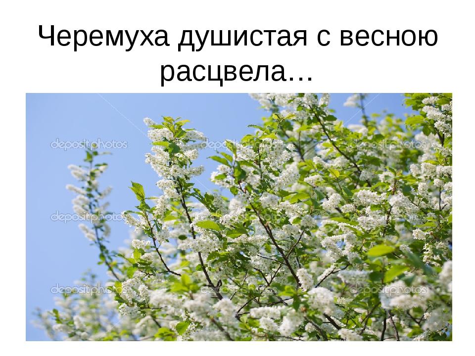 черёмуха душистая с весною расцвела гдз