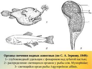 Органы свечения водных животных (по С. А. Зернову, 1949): 1–глубоководный уд