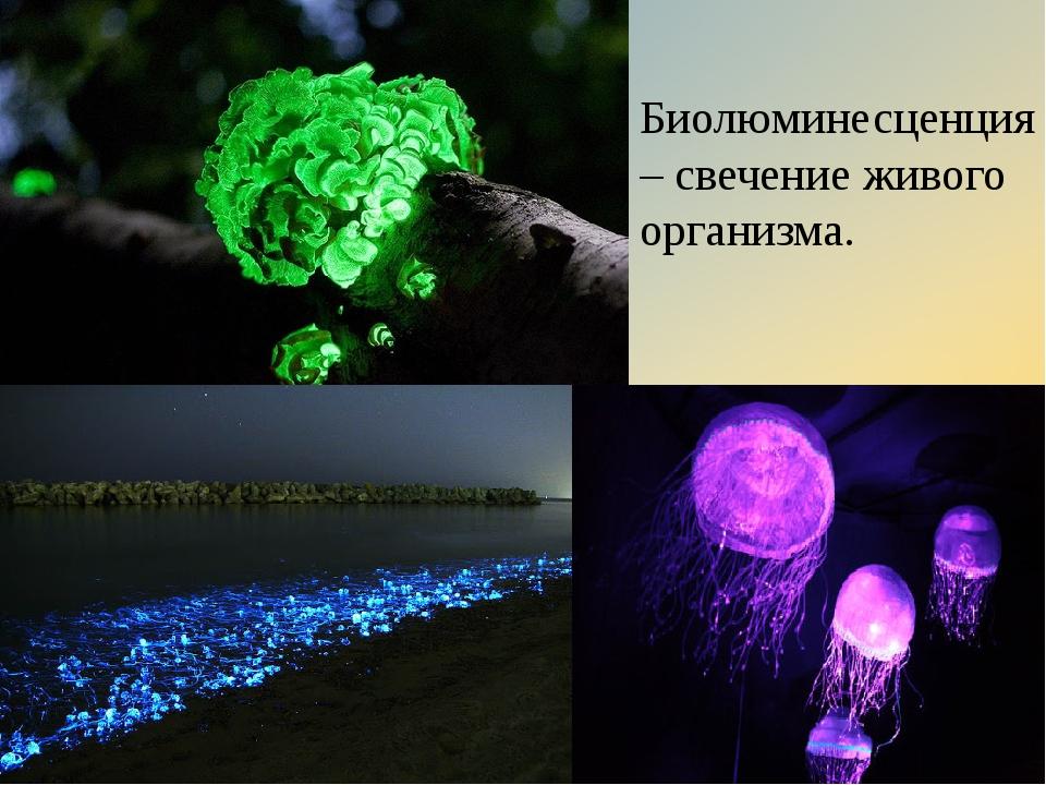 Биолюминесценция – свечение живого организма.