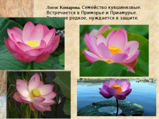 Лотос Комарова. Семейство кувшинковые. Встречается в Приморье и Приамурье. Ра