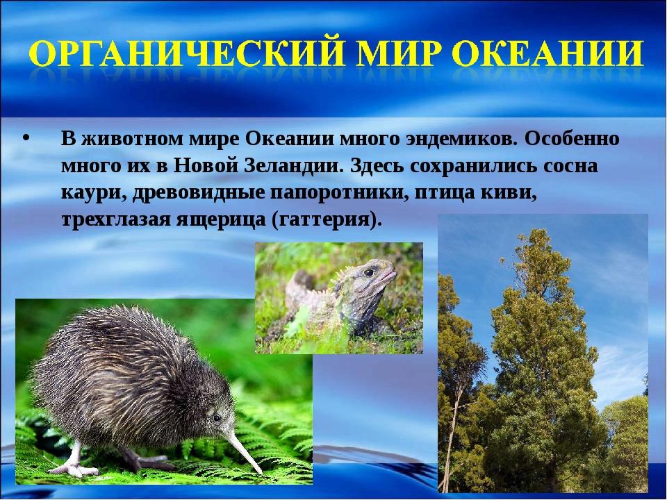 В животном мире Океании много эндемиков. Особенно много их в Новой Зеландии....