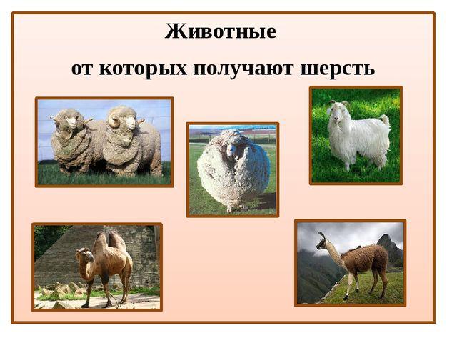 Животные от которых получают шерсть