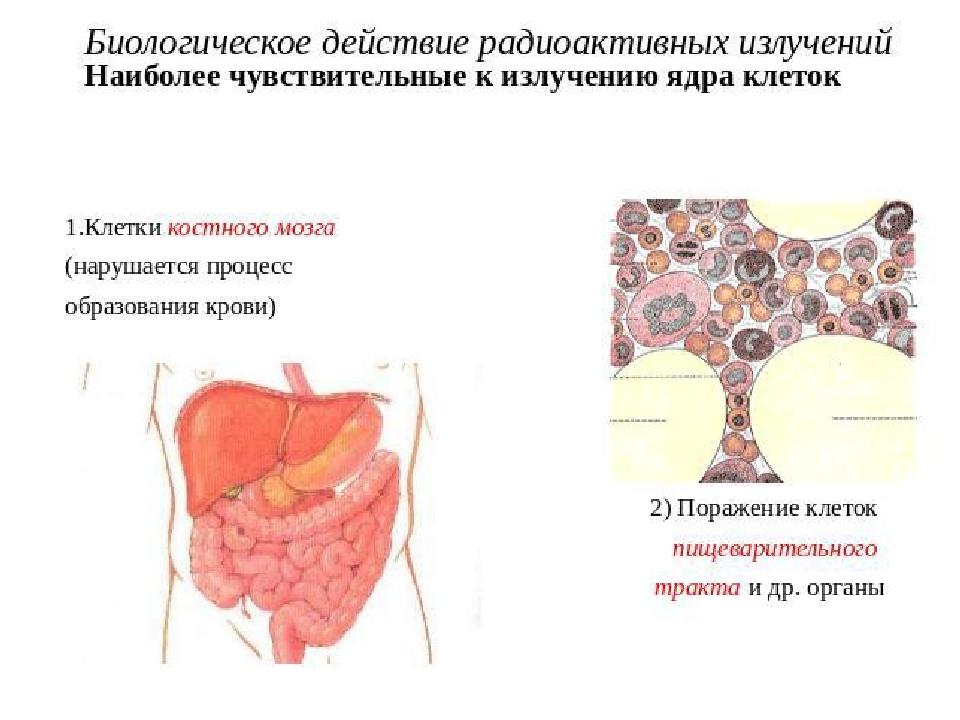 отправлением, биологическое действие радиоактивного излучения организация генов