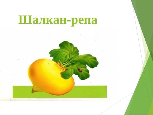 Шалкан-репа