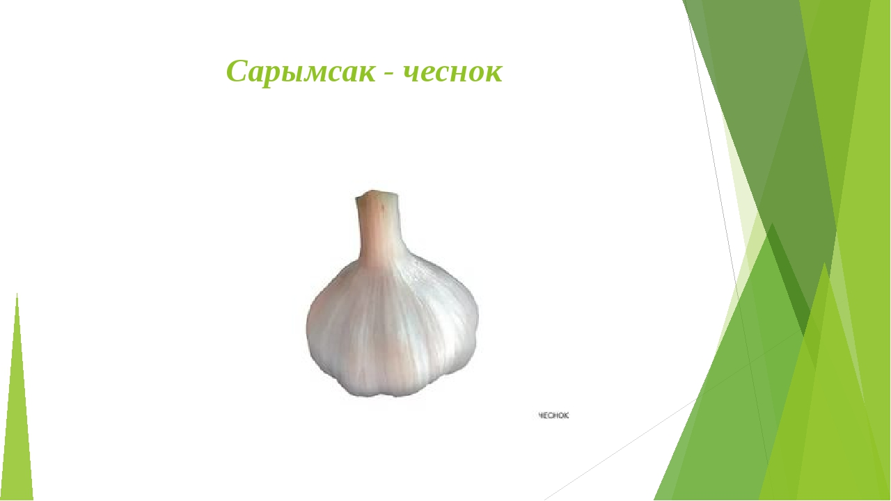 Сарымсак - чеснок