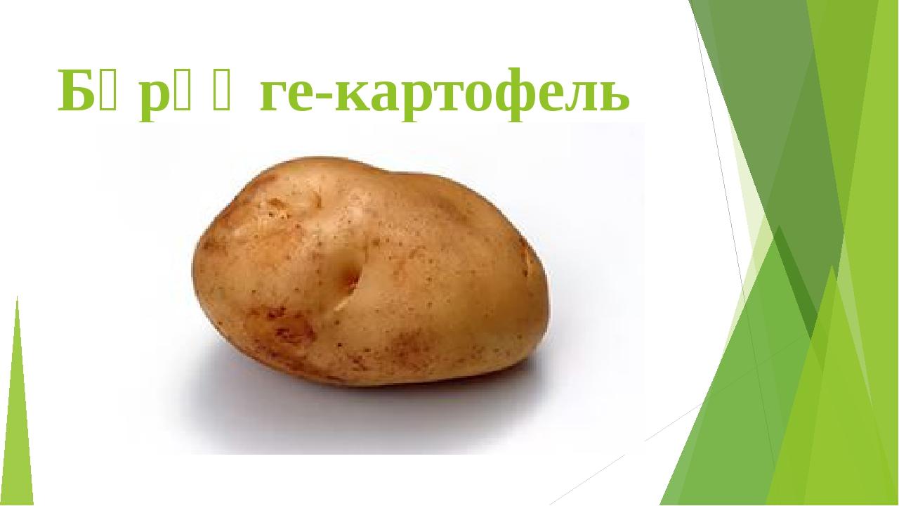 Бәрәңге-картофель