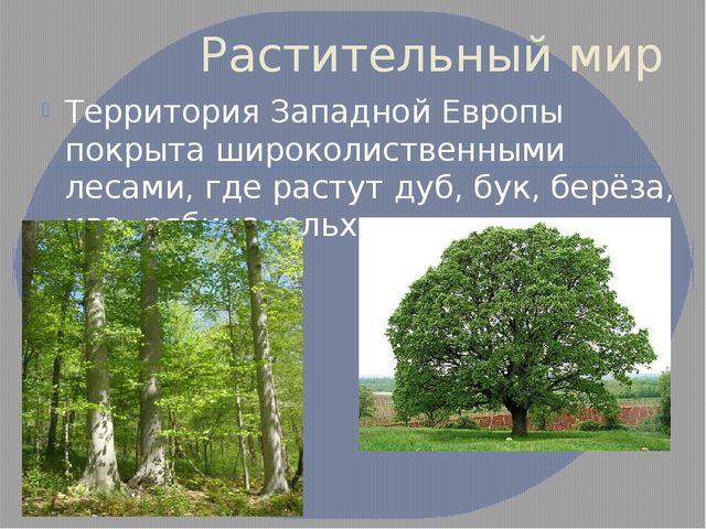 Растительный мир Территория Западной Европы покрыта широколиственными лесами,...