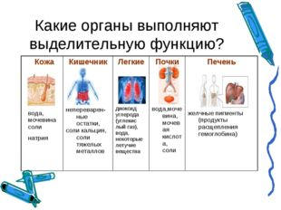Какие органы выполняют выделительную функцию? Кожа вода, мочевина соли натрия