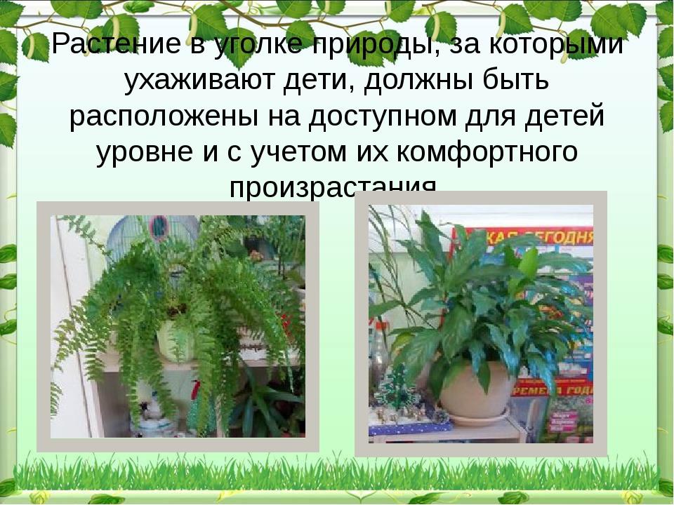 Растение в уголке природы, за которыми ухаживают дети, должны быть расположен...