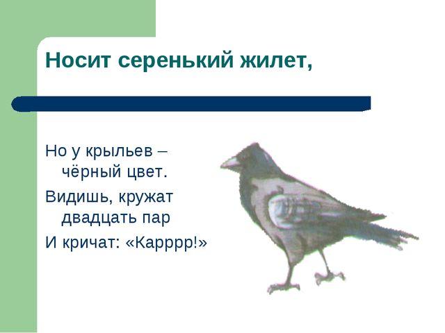 Носит серенький жилет, Но у крыльев – чёрный цвет. Видишь, кружат двадцать па...