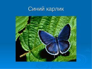 Синий карлик