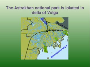 The Astrakhan national park is lokated in delta of Volga