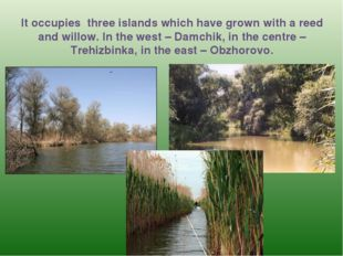 It occupies three islands which have grown with a reed and willow. In the wes