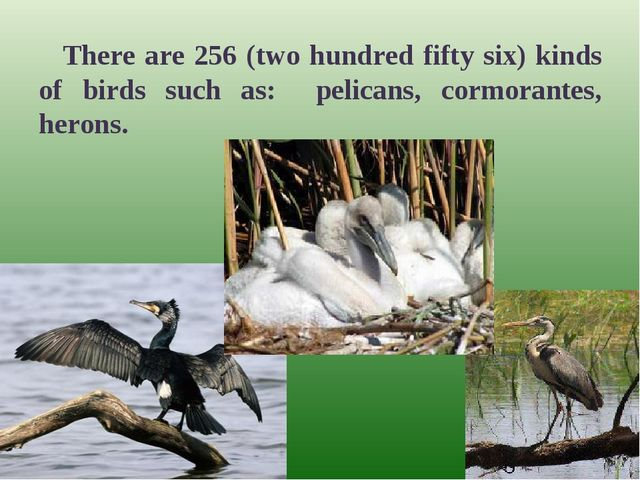 There are 256 (two hundred fifty six) kinds of birds such as: pelicans, cormo...