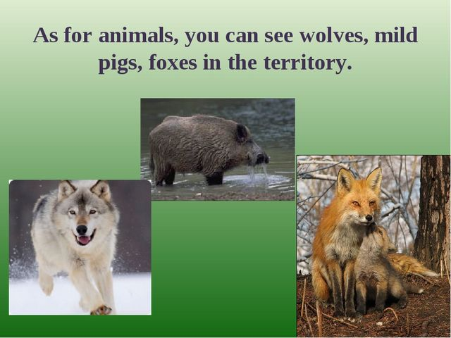 As for animals, you can see wolves, mild pigs, foxes in the territory.