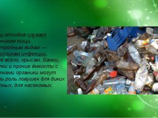 Свалки отходов служат источником пищи синантропным видам — переносчикам инфе