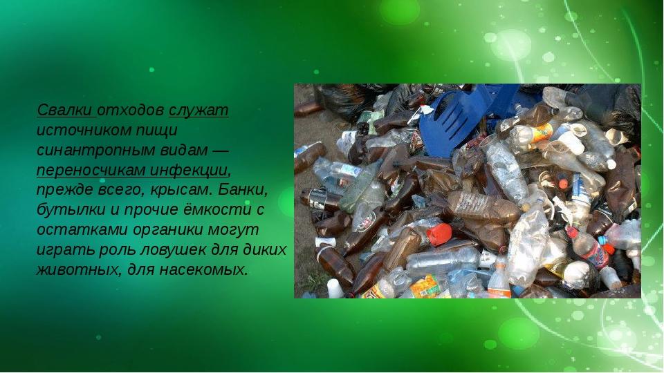 Свалки отходов служат источником пищи синантропным видам — переносчикам инфе...