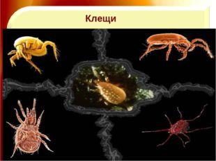 11.11.16 http://aida.ucoz.ru Клещи