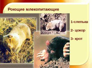 11.11.16 http://aida.ucoz.ru Роющие млекопитающие 1-слепыш 2- цокор 3- крот