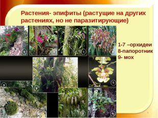 11.11.16 http://aida.ucoz.ru Растения- эпифиты (растущие на других растениях,