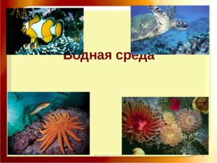 11.11.16 http://aida.ucoz.ru Водная среда