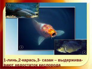 11.11.16 http://aida.ucoz.ru 1-линь,2-карась,3- сазан – выдержива- вают недо
