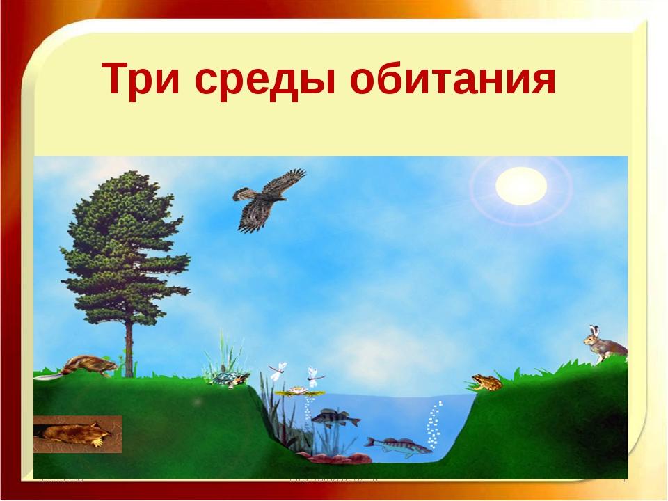 11.11.16 http://aida.ucoz.ru Три среды обитания