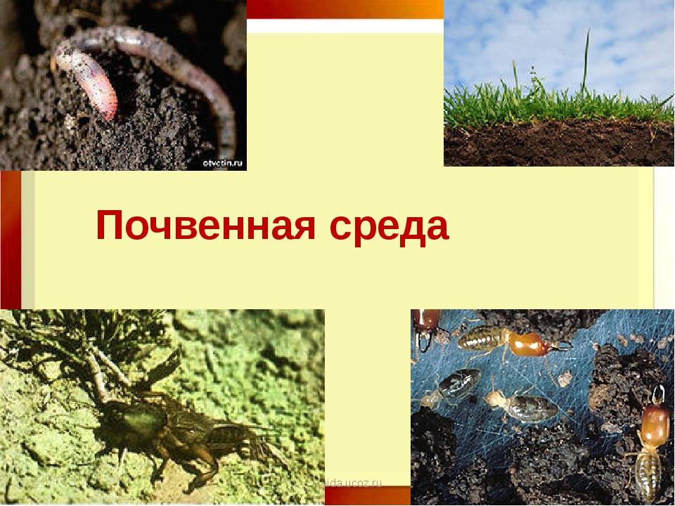11.11.16 http://aida.ucoz.ru Почвенная среда