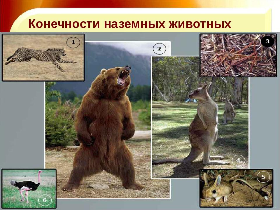 11.11.16 http://aida.ucoz.ru Конечности наземных животных