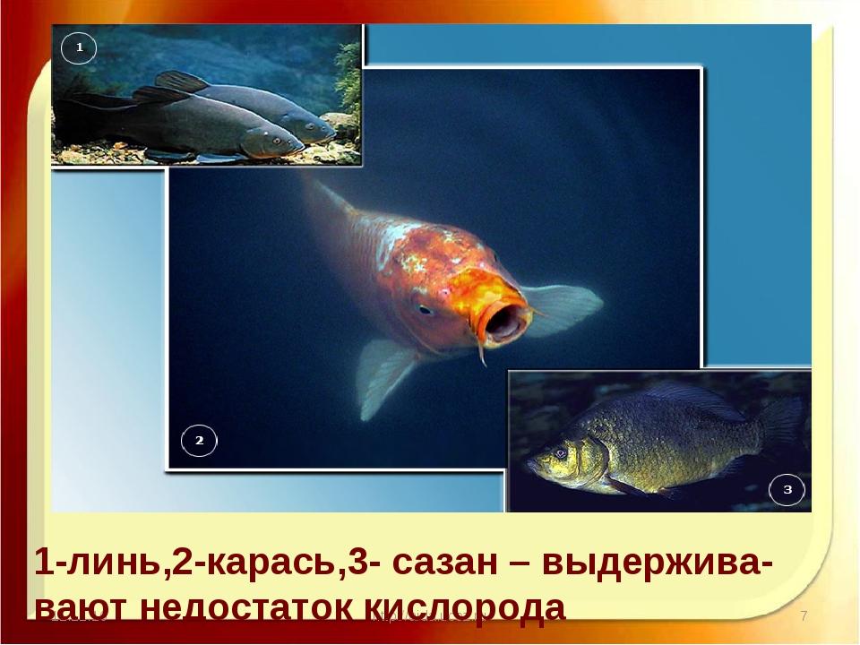 11.11.16 http://aida.ucoz.ru 1-линь,2-карась,3- сазан – выдержива- вают недо...