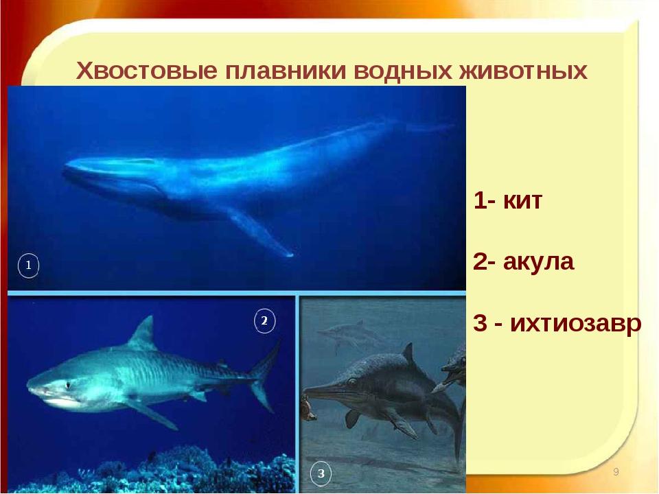 11.11.16 http://aida.ucoz.ru Хвостовые плавники водных животных 1- кит 2- аку...