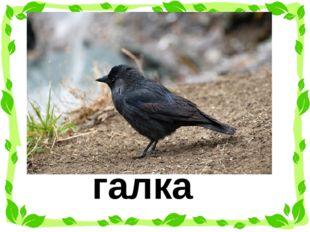 Отгадай загадку. Чёрная птица, Ничего не боится, На зиму не улетает, Нашу мес
