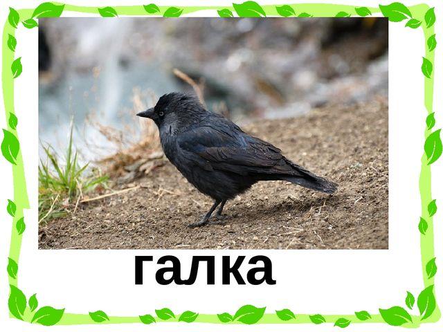 Отгадай загадку. Чёрная птица, Ничего не боится, На зиму не улетает, Нашу мес...