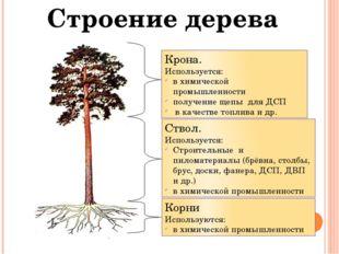Строение дерева Крона. Используется: в химической промышленности получение ще